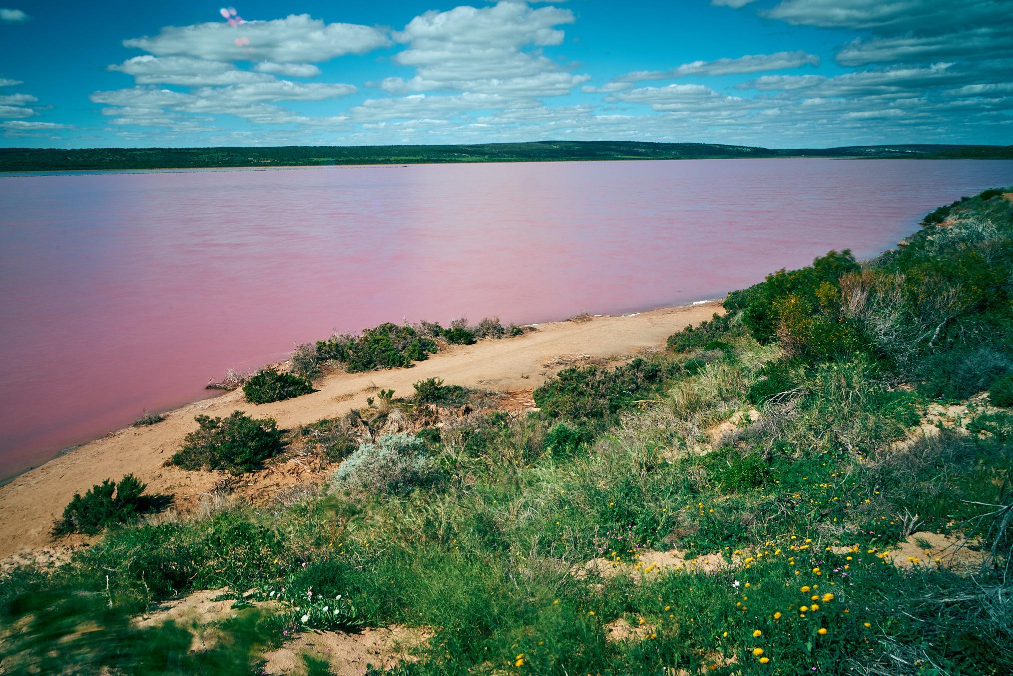 Pink Lake - 7719