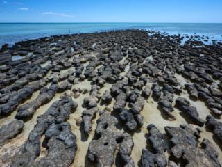 Hamelin Stromatolites - 7923