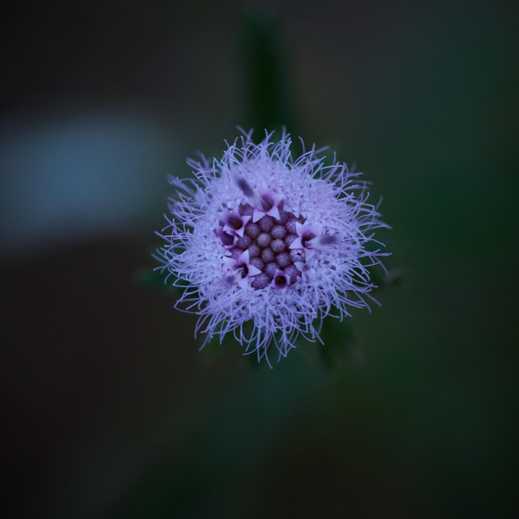 Tiny Flower - 8159